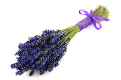 Lavender bouquet isolated Stock Photos