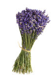 Lavender bouquet. Lavender isolated on white background Royalty Free Stock Photography