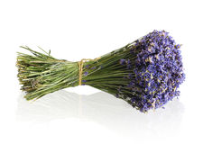 Lavender bouquet. Lavender isolated on white background Stock Photos