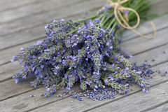 Lavender bouquet with seeds Royalty Free Stock Photography