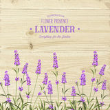 The lavender bouquet. The lavender bouquet with text template over wooden texture. The lavender elegant card. Vintage postcard background vector template for Royalty Free Stock Photo