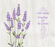 The lavender bouquet. The lavender bouquet with text template over wooden texture. The lavender elegant card. Vintage postcard background vector template for Stock Photography