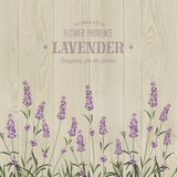 The lavender bouquet. Royalty Free Stock Photos