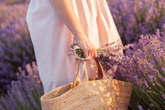 Lavender bouquet in a wicker bag on lavender field sunset Stock Photo