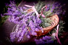 Lavender bouquet in wicker basket stock images