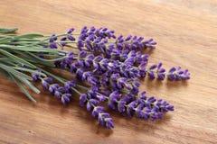 Lavender. Stock Photo