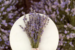 Lavender bouquet on a wooden creamy bench in lavender field Stock Photo