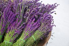 Lavender bouquets in basket and bee. Lavender vintage with fresh, beautiful purple lavender flowers blossoms. Poland. Copy space for your message text Stock Image