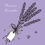 Lavender bouquets and label. Vintage hand drawn lavender vector illustration  on violet background. Engraving illustration.  Lavender herbal bouquets and label Royalty Free Stock Image