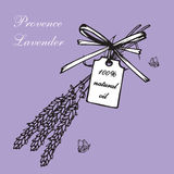 Lavender bouquets and label. Vintage hand drawn lavender vector illustration  on violet background. Engraving illustration.  Lavender herbal bouquets and label Royalty Free Stock Photography
