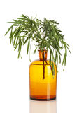Lavender branch in pharmacy bottle isolated Stock Photography