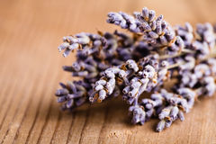 Lavender bunch Stock Images