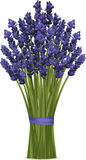 Lavender bunch Royalty Free Stock Images