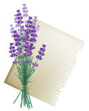Lavender bunch. Retro-styled background with lavender bunch and a leaf of paper Stock Photo