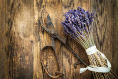 Lavender bunch bound, secateurs beside him. Stock Image