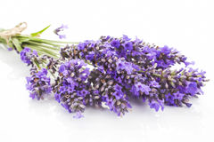 Lavender bunch detail. Stock Photos