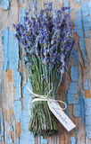 Lavender. Royalty Free Stock Photography