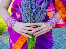 Lavender bunch in a hands of a woman wearing sari royalty free stock photography