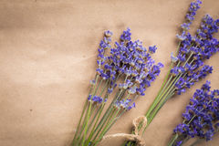 Lavender bunch Stock Photography