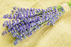 Lavender bunch on rustic jute fabric Stock Photo