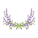 Lavender bunch. Vector floral frame Royalty Free Stock Photo