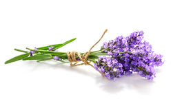 Lavender bunch Stock Image