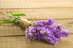 Lavender bunch Royalty Free Stock Image