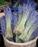 Lavender Bunches for Sale Stock Photo