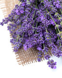 Lavender on burlap Royalty Free Stock Image