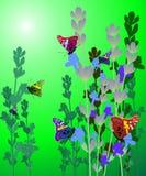 Lavender card Stock Photos