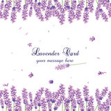 Lavender Card Border Vector. Gentle blossom floral bouquet. Vintage Label with lavender beautiful fragrance Stock Images