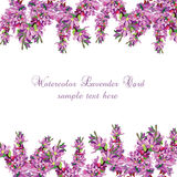 Lavender Card Border. Vector. Gentle blossom floral bouquet. Vintage Label with lavender beautiful fragrance Stock Photos