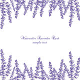 Lavender Card Border. Vector. Gentle blossom floral bouquet. Vintage Label with lavender beautiful fragrance Royalty Free Stock Images