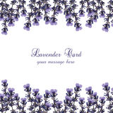 Lavender Card decorated Border. Gentle blossom floral Lavanda bouquet. Vintage Label with lavender beautiful fragrance Royalty Free Stock Photos