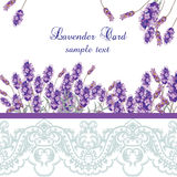Lavender Card with lace border. Vector Gentle blossom floral bouquet. Vintage Label with lavender beautiful fragrance Royalty Free Stock Photo