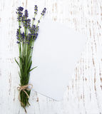 Lavender with card Stock Photography