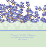Lavender card province style. Vector detailed realistic flowers Stock Photo