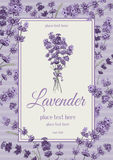 Lavender card. Vintage card with hand drawn floral elements in engraving style - fragrant lavender. Vector illustration Stock Photography