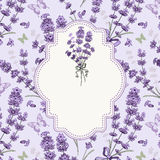 Lavender card Royalty Free Stock Photos