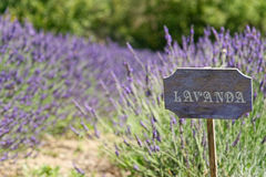 Lavender cartel. Of italian country Royalty Free Stock Photos