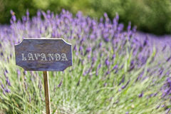 Lavender cartel. Of italian country Royalty Free Stock Image