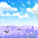 Lavender cattle ranch Royalty Free Stock Photos