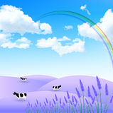 Lavender cattle ranch Royalty Free Stock Photo