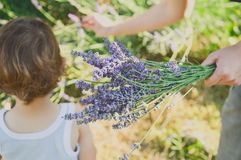 Lavender Royalty Free Stock Photos
