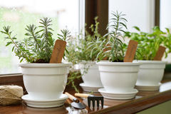 Lavender in a clay pot. With a paper label in home interior closeup stock images