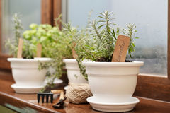Lavender in a clay pot. With a paper label in home interior closeup royalty free stock photography
