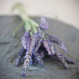 Lavender Close-Up Royalty Free Stock Image