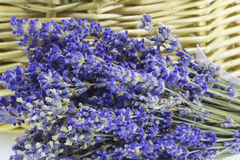 Lavender. Closeup picture of a bunch of purple lavender flowers Royalty Free Stock Photography