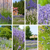 Lavender collage Stock Images
