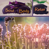 Lavender collage Stock Photography